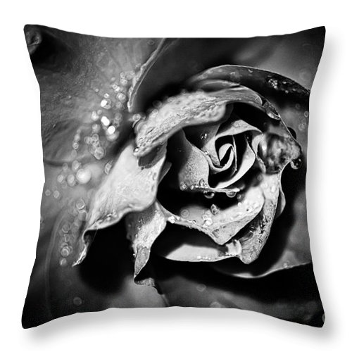 Beauty In Nature Throw Pillow featuring the photograph After The Storm by Venetta Archer