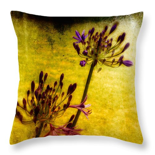 Flower Throw Pillow featuring the photograph Agapanthus II by Adrian McMillan
