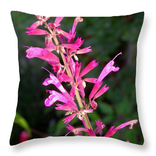 Agastache Ava Throw Pillow featuring the photograph Agastache Ava by Cynthia Wallentine