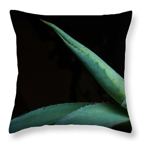 Agave Throw Pillow featuring the photograph Agave Abstract 2 by Photos By Cassandra