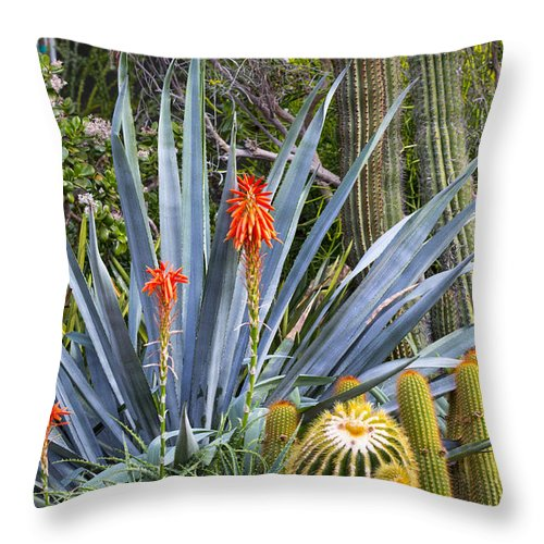 Agave Throw Pillow featuring the photograph Agave And Cactus by Robert Storost