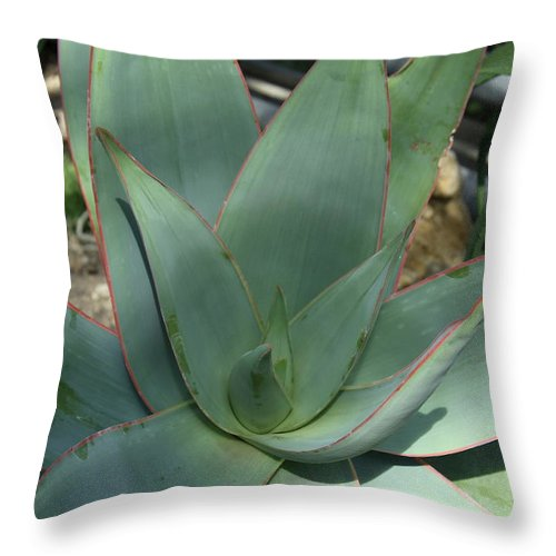 Agave Throw Pillow featuring the photograph Agave by Christiane Schulze Art And Photography