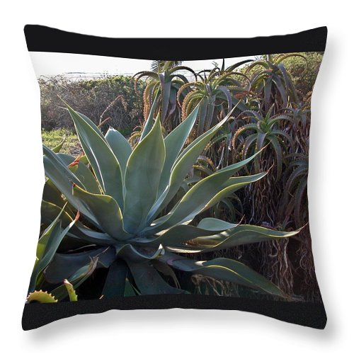 Agave Throw Pillow featuring the photograph Agave by Douglas Barnett