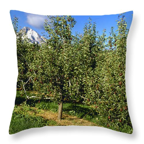 Light Throw Pillow featuring the photograph Agriculture - Bosc Pear Orchard by Charles Blakeslee