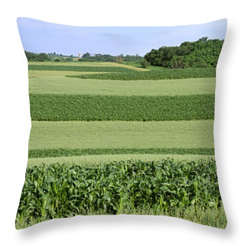 Crop Throw Pillow featuring the photograph Agriculture - Contour Strips Of Mid by Timothy Hearsum