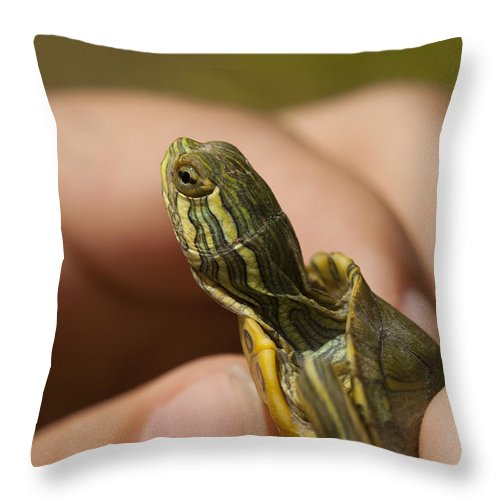 Pseudemys Alabamensis Throw Pillow featuring the photograph Alabama Red-bellied Turtle - Pseudemys Alabamensis by Kathy Clark