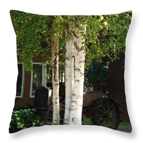 Tree Throw Pillow featuring the photograph Alaskan Birch by Lew Davis