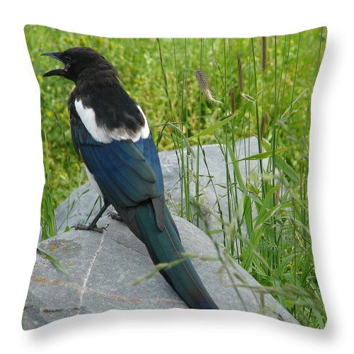 Animal Throw Pillow featuring the photograph Alaskan Magpie by Lew Davis