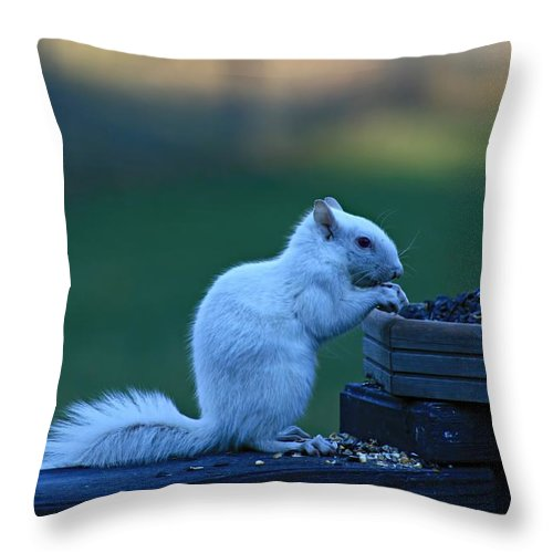 White Squirrel Throw Pillow featuring the photograph Albino Squirrel by Amanda Stadther