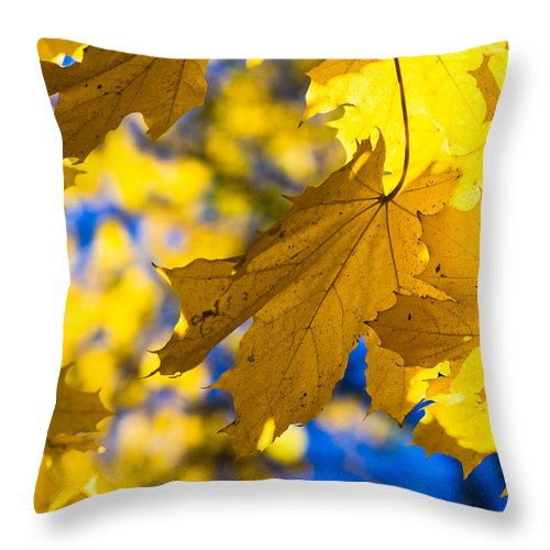 Abstract Throw Pillow featuring the photograph Alchemy Of Nature - Making Gold From Green by Alexander Senin