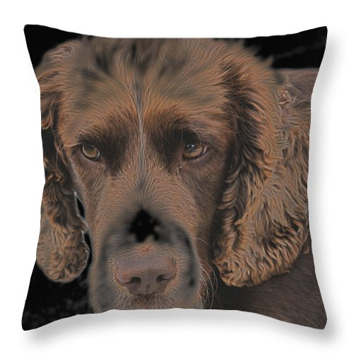 Photographs Of Dogs Throw Pillow featuring the photograph Hypnotic by Dave Byrne
