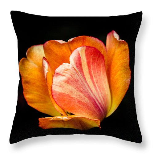 Tulips Throw Pillow featuring the photograph Alive by Sara Frank