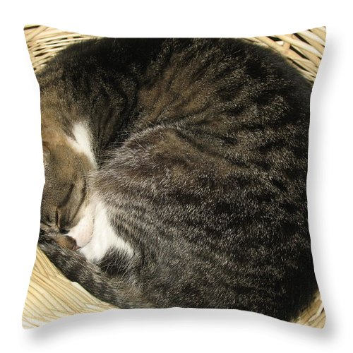 Cat Throw Pillow featuring the photograph All Curled Up by Marita McVeigh