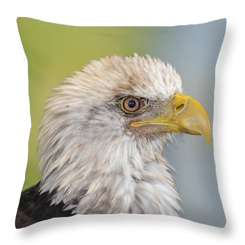 Eagle Throw Pillow featuring the photograph All Feathers And Additude by Bill Tiepelman