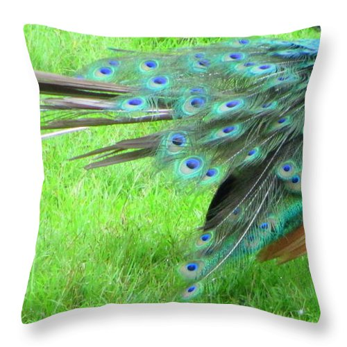 Peacock Throw Pillow featuring the photograph All Feathers by Randall Weidner