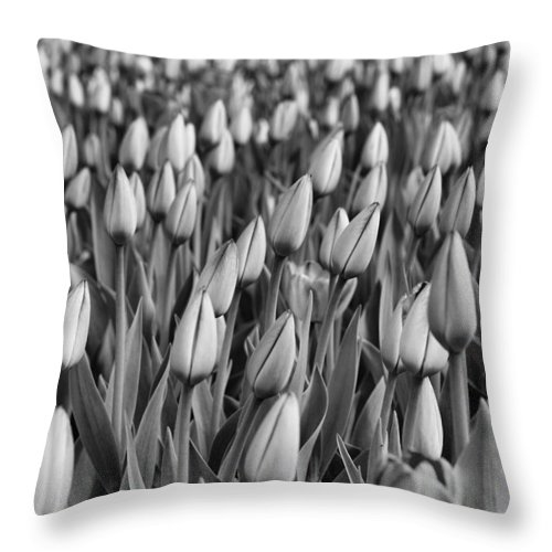 Tulip Throw Pillow featuring the photograph Almost by Eunice Gibb