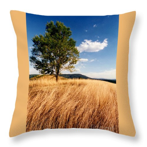 Tree Throw Pillow featuring the photograph Alone On A Hill by Laura Corebello