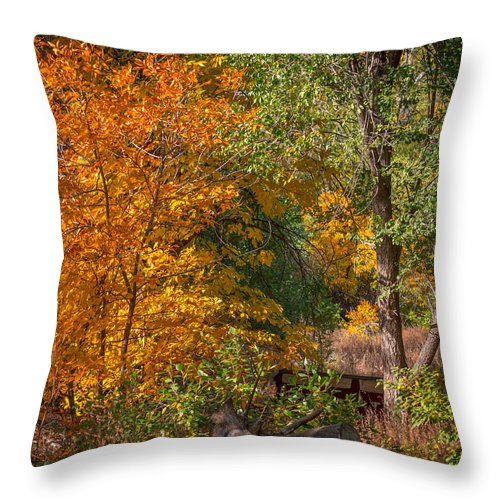 Tree Throw Pillow featuring the photograph Along The Trail by Ernie Echols