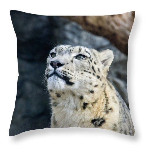 Eyes Throw Pillow featuring the photograph Always Alert by Angelina Vick
