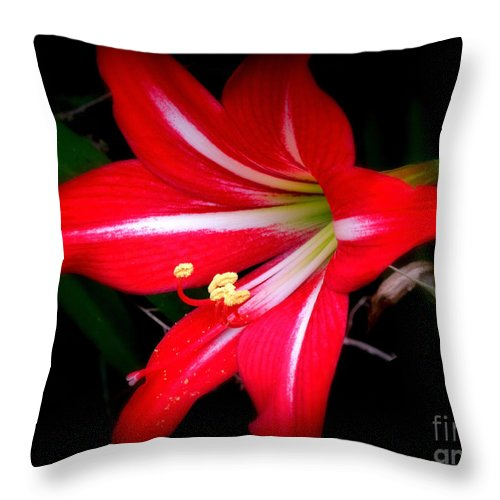 Amaryllis Throw Pillow featuring the photograph Amaryllis . Hippeastrum Species by Renee Trenholm