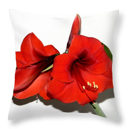 Amaryllis Flower Red Throw Pillow featuring the mixed media Amaryllis by Owl's View Studio