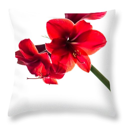 Amaryllis Throw Pillow featuring the photograph Amaryllis by Sara Frank