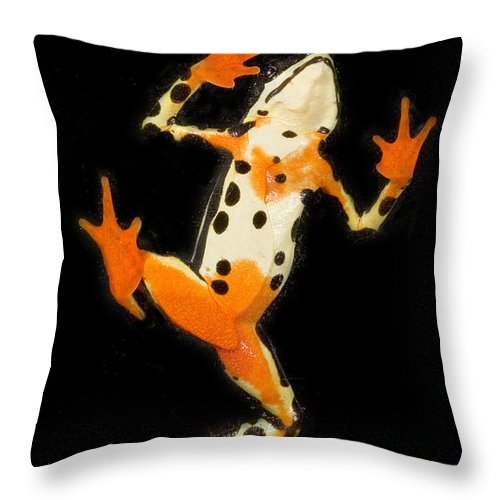 Amazon Harlequin Toad Throw Pillow featuring the photograph Amazon Harlequin Toad by Gregory G Dimijian MD