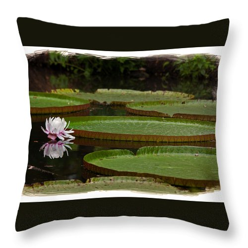 Amazon.lily Throw Pillow featuring the photograph Amazon Lily Pad by Farol Tomson