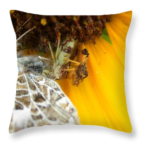 Ambush Bugs Throw Pillow featuring the photograph Ambushed by Shane Bechler