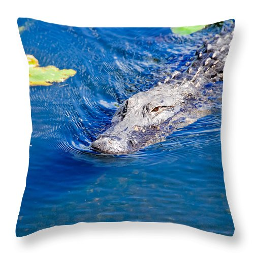 Florida Throw Pillow featuring the photograph American Alligator by Don and Bonnie Fink