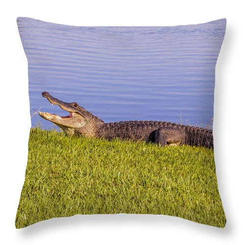 Alligator Throw Pillow featuring the photograph American Alligator by Zina Stromberg