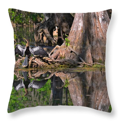 Florida Throw Pillow featuring the photograph American Anhinga Or Snake-bird by Christine Till