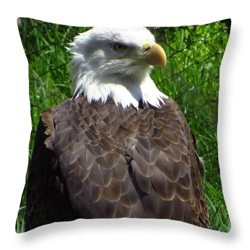Us National Bird Throw Pillow featuring the photograph American Bald Eagle by Sonali Gangane