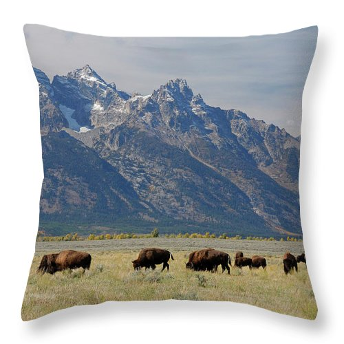 Flpa Throw Pillow featuring the photograph American Bison Herd by Martin Withers