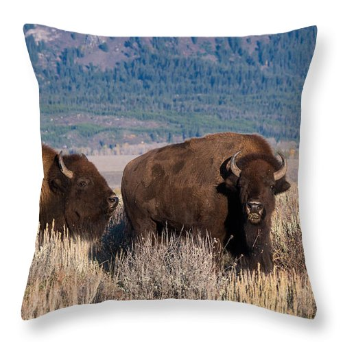 Bison Throw Pillow featuring the photograph American Bison Trio by Kathleen Bishop