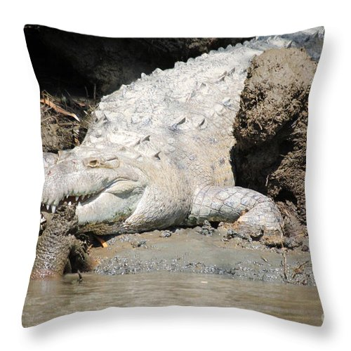 Wildlife Throw Pillow featuring the photograph American Croc by Bob Hislop