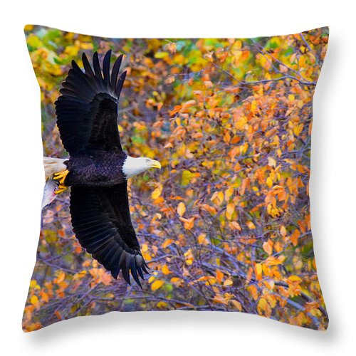 Eagle Throw Pillow featuring the photograph American Eagle In Autumn by William Jobes