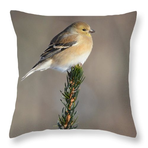 Bird Throw Pillow featuring the photograph American Goldfinch by Charles Owens