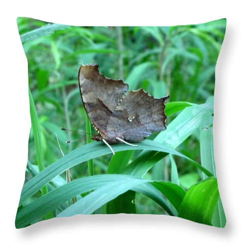 American Snout Butterfly Images Butterflies Of Maryland Images Butterfly Diversity American Snout Photograph Prints Forest Ecostystem Biodiversity Forest Butterfly Prints Leaf Winged Butterfly Nature Bowelys Quarters Maryland Butterfly Pictures Throw Pillow featuring the photograph American Snout Butterfly by Joshua Bales