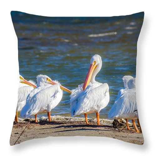 American White Pelicans Throw Pillow featuring the photograph American White Pelicans by Debra Martz
