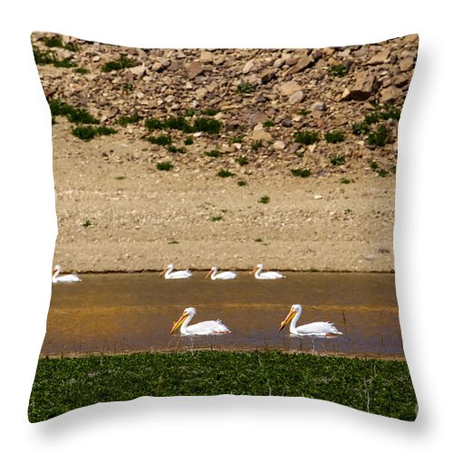 Birds Throw Pillow featuring the photograph American White Pelicans by Robert Bales