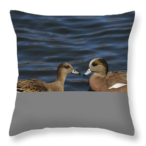 New Mexico Fauna Throw Pillow featuring the photograph American Widgeon Pair by John Shaw