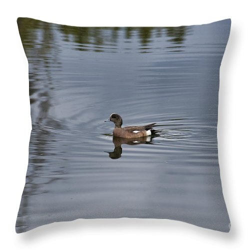 Bird Throw Pillow featuring the photograph American Wigeon by David Arment