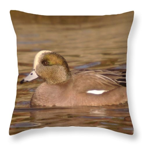 Ducks Throw Pillow featuring the photograph American Wigeon by Jeff Swan