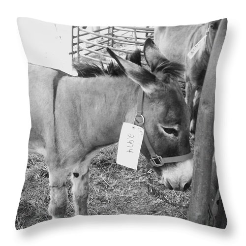 Animals Throw Pillow featuring the photograph Amish Donkey At Action by Eric Schiabor