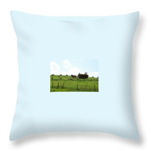 Horse Throw Pillow featuring the photograph Amish Fall Harvest by R A W M