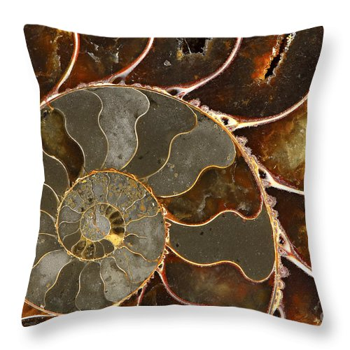 Shell Throw Pillow featuring the photograph Ammolite by Elena Elisseeva