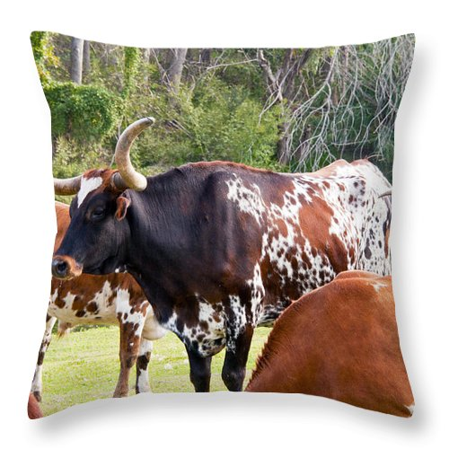 Chisholm Trail Days Georgetown Texas Longhorn Longhorns Cattle Animal Animals Creature Creatures Throw Pillow featuring the photograph Among Friends by Bob Phillips