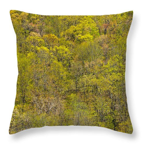 Trees Throw Pillow featuring the photograph Among The Trees by Karol Livote