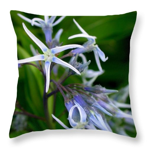 Amsonia Hubrichtii Blue Stars Throw Pillow featuring the photograph Amsonia Blue Stars by Cynthia Wallentine